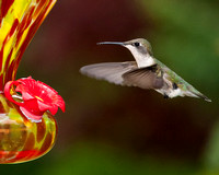 Hummers-060